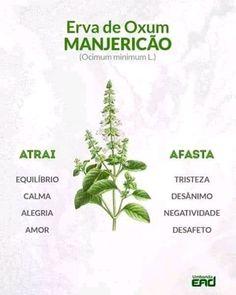 Vida Natural, Little Bit, Orisha, Love Garden, Healing Herbs, Book Of Shadows, My Secret Garden, Botany, Feng Shui