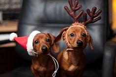 Mamãe, se Deus nos dá o que comer, a cegonha trás os bebês e o Papai Noel, os presentes de Natal... Pra que serve o papai?