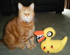 "Duck and cat ~ Kym aka ""spookysculpter"""