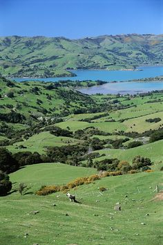 Rolling fields overlooking Otago Peninsula, New Zealand. Photo by Todd Glipstein.