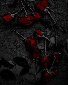 my roses grew back as thorns  #roses #red #rosesinlove #flowers #love #picture
