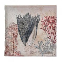 Accent Plus Spiked Conch Shell Canvas Wall Art