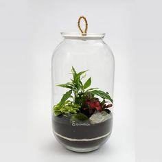 DIY - las w słoiku growitbox, growitbox.com/ forest in the jar / forest in jar /  #growitbox #laswszkle #laswsłoiku #laswsloiku #las #ogródwszkle #natura #nature #forestinjar #forestinthejar #green #greendesign #plants #pomyslnaprezent #beautiful #dlaniego #dlaniej #homedesign #homedecor #mech #moss #las #mossarium #ecosystem #terrarium #biosfera