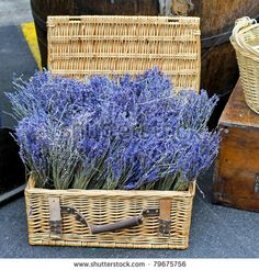 stock-photo-dry-lavender-plant-in-a-basket-sold-on-market-79675756.jpg (450×470)