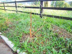 Vândalos destroem árvores recém-plantadas em Harmonia  http://www.jornalnh.com.br/_conteudo/2015/04/noticias/regiao/150912-vandalos-destroem-arvores-recem-plantadas-em-hamonia.html…
