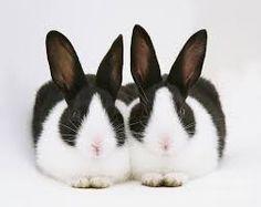 Dutch bunnies