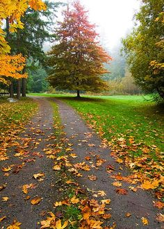Fallen Leaves On A Road, Washington Greeting Card for Sale by Panoramic Images Autumn Art, Autumn Theme, Autumn Leaves, Fallen Leaves, Beautiful Sky, Beautiful World, Beautiful Gardens, Fall Wallpaper, Nature Wallpaper