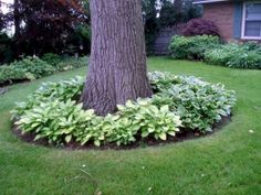 37 Garden Edging Ideas: How To Ways For Dressing Up Your Landscape 2018 Landscape ideas for backyard Sloped backyard ideas Small front yard landscaping ideas Outdoor landscaping ideas Landscaping ideas for backyard Gardening ideas Cod And After Boulders Landscaping Around Trees, Small Front Yard Landscaping, Backyard Trees, Outdoor Landscaping, Outdoor Gardens, Mulch Around Trees, Luxury Landscaping, Southern Landscaping, Simple Landscaping Ideas
