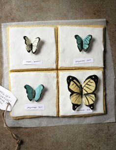 butterfly specimen cookies