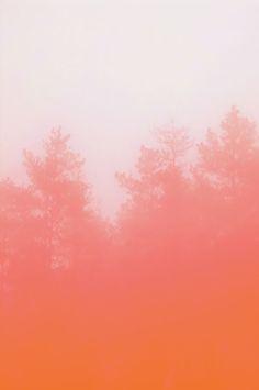 I ❤  COLOR CORAL + PEACH ❤  peach echo