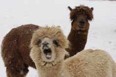 Snowstorms and blizzards send people to raid supermarkets and prepare their homes for days of staying indoors, but how do the animals at the Smithsonian's …