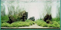 Incredible aquarium aquascape that looks like a woodland path.
