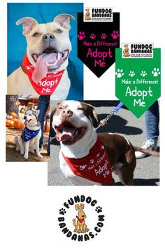 37 Best Dog Adoption Bandanas images in 2018 | Bandana, Dogs, Adoption