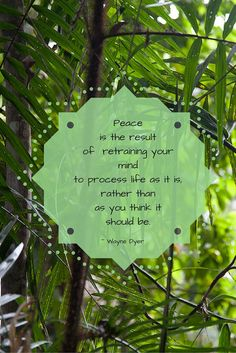 Peace is the result of retraining your mind to process life as it is, rather than as you think it should be.  ~ Wayne Dyer