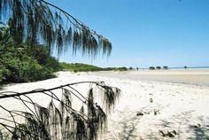 Jungle Tours #ecotourism #queensland #australia
