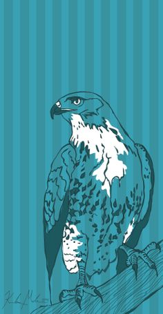Hawk - 2014 [digital drawing]   More Artwork on MederMade.wordpress.com - Portfolio: KendraMeder.wordpress.com