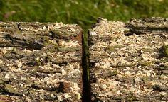 Saiba como equilibrar a relação entre carbono e nitrogênio na sua composteira