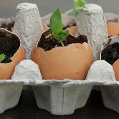 Egg Shell Seed Starters | These Egg Shell Seed Starters Make The Cutest Garden