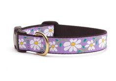 Spring calls for a new Daisy Collar on some lucky ladies!