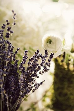 """Lavender and a white rose...and a huge WELCOME to the newest """"Le Chalet Lavande"""" groupies, Tena Virden and ☀ S u m m e r ☀."""