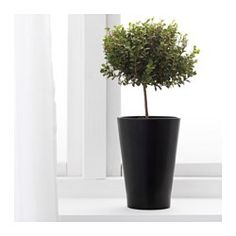 IKEA - PAPAJA, Plant pot, , The shape and height of the pot make it suitable for orchids.Space for air to circulate around the roots.Lacquered interior; makes the plant pot waterproof.