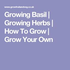 Growing Basil | Growing Herbs | How To Grow | Grow Your Own