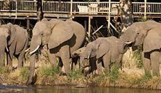 Kruger National Park South Africa safari - This definitive Kruger Park safari accommodation guide offers suggested package tours, day trips, safari lodges Kruger National Park, National Parks, South Africa Safari, African Safari, Lodges, Day Trips, Adventure Travel, Places To Visit, Wildlife