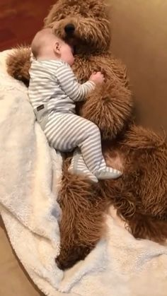 Super Cute Puppies, Cute Baby Dogs, Cute Funny Dogs, Cute Funny Animals, Funny Animal Videos, Dog Videos, Cute Baby Videos, Cute Stories, Goldendoodle