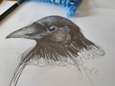 Study of a crow or is it a raven? Either way they are beautiful birds Beautiful Birds, Crow, My Drawings, Raven, Sketch, Study, Sculpture, Illustrations, Nature