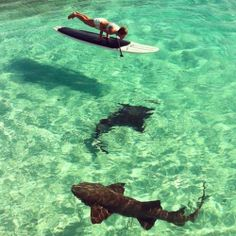 No feet #yoga plank on a stand up paddleboard with sharks. Just your every day vacation in paradise.