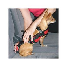 Keep pets safe in the car with the Snoozer Pet Safety Harness | Solutions.com #Pets #Dogs #Travel #Auto