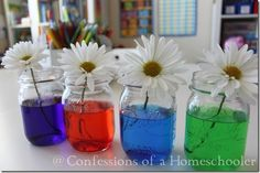 Colored flowers science experiment