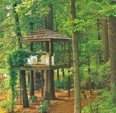 Tree house in the wood.