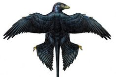 This is an image of a tiny dinosaur, no joke. The (newly discovered) Microraptor lived about 130 million years ago, during the early Cretaceous period, in what is now northeastern China.