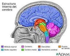 7 descubrimientos sobre el cerebro que nos ayudan a ser más eficaces – Neuropsicología y Aprendizaje