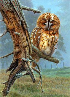 Amazing owl wildlife painting by Andrew Hutchinson! Wildlife Paintings, Wildlife Art, Animal Paintings, Saw Whet Owl, Owl Artwork, Owl Pictures, Beautiful Owl, Illustrator, Mundo Animal