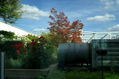 Rooftop garden - Berlin Stilwerk