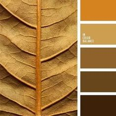 Color scale of autumn leaves: warm shades of brown, caramel color with orange-brown accent. This color solution is suitable for the decoration of w… Gold Color Palettes, Colour Pallette, Colour Schemes, Color Harmony, Color Balance, Sepia Color, Red Colour, Color Scale, Beautiful Color Combinations