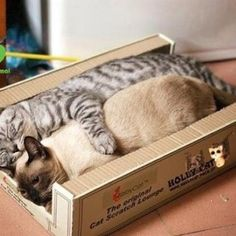 crushcats.....