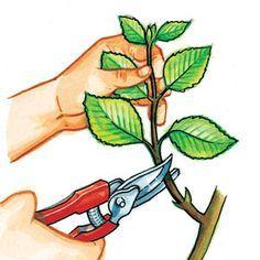 De fem trinnene for å kutte hortensia Hydrangea Macrophylla, Dream Garden, Garden Art, Gifts For Photographers, Garden Planters, Permaculture, Creative Gifts, Horticulture, Garden Projects