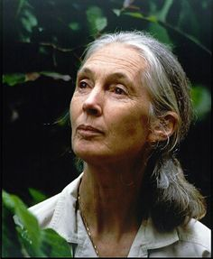 Jane Goodall, the world-renowned conservationist travels more than 300 days a year, spreading her message of peaceful co-existence with nature and one another. She is proof that travel—and travellers—can change the world. Jane Goodall, We Run The World, Change The World, Amy Poehler Smart Girls, Happy Woman Day, Women In History, Photography Women, Powerful Women, Women Empowerment