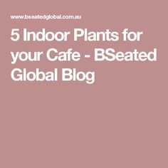 5 Indoor Plants for your Cafe - BSeated Global Blog