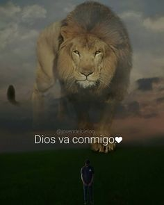 Lion Quotes, Bible Quotes, Biblical Verses, Bible Scriptures, Perro Fox Terrier, Lion Images, Beautiful Love Pictures, Gods Not Dead, Son Of God