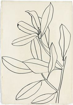 """sympathyfortheartgallery:  """" """"Leaves, Ile St. Louis"""" (1950) by Ellsworth Kelly. The artist collects drawings by greats such as Matisse and Picasso. (via Ellsworth Kelly Casts His Cold Eye on Art Market, Peers - Bloomberg)  """""""
