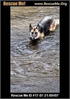 ― Wisconsin German Shepherd Rescue ― ADOPTIONS ―RescueMe.Org