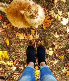 Feline Adventures Instagram: pennsylvaniaprep97 #prep #preppy #prepster #preppylife #preppystyle #classy #ivystyle #ivyleague #frat #fratty #photography #cat #catmodel #kitties #wiskers #pin #trending #pinterest #thepreppypennsylvanian