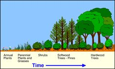 ecological succession essay questions