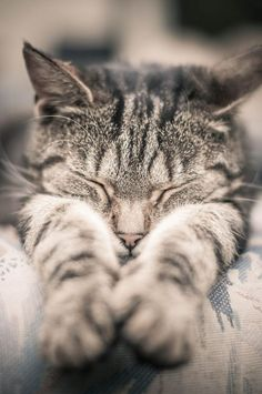 serendipitouswanderings:  (via Pin by Cheryl Haseman on | kitty cats | | Pinterest)