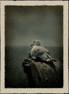 Bei Den Letzten Grashalmen Soll Man Den Faden Verlieren Und Den Salzschaum  Und Das Scharfe Zischen Des Windes Einatmen Und Ausatmen Und ...
