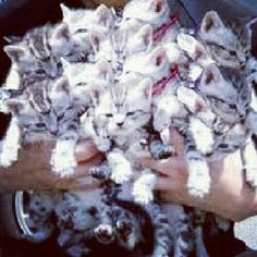 For National Cat Day (Oct 29)  Here's  Cat bouquet =)